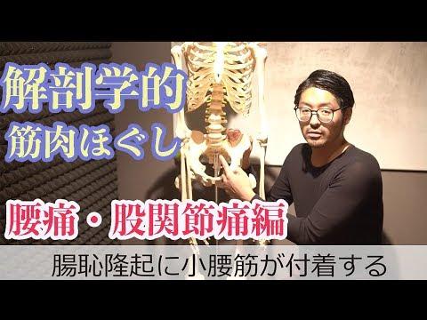 解剖学的筋肉ほぐし 腰痛・股関節痛編