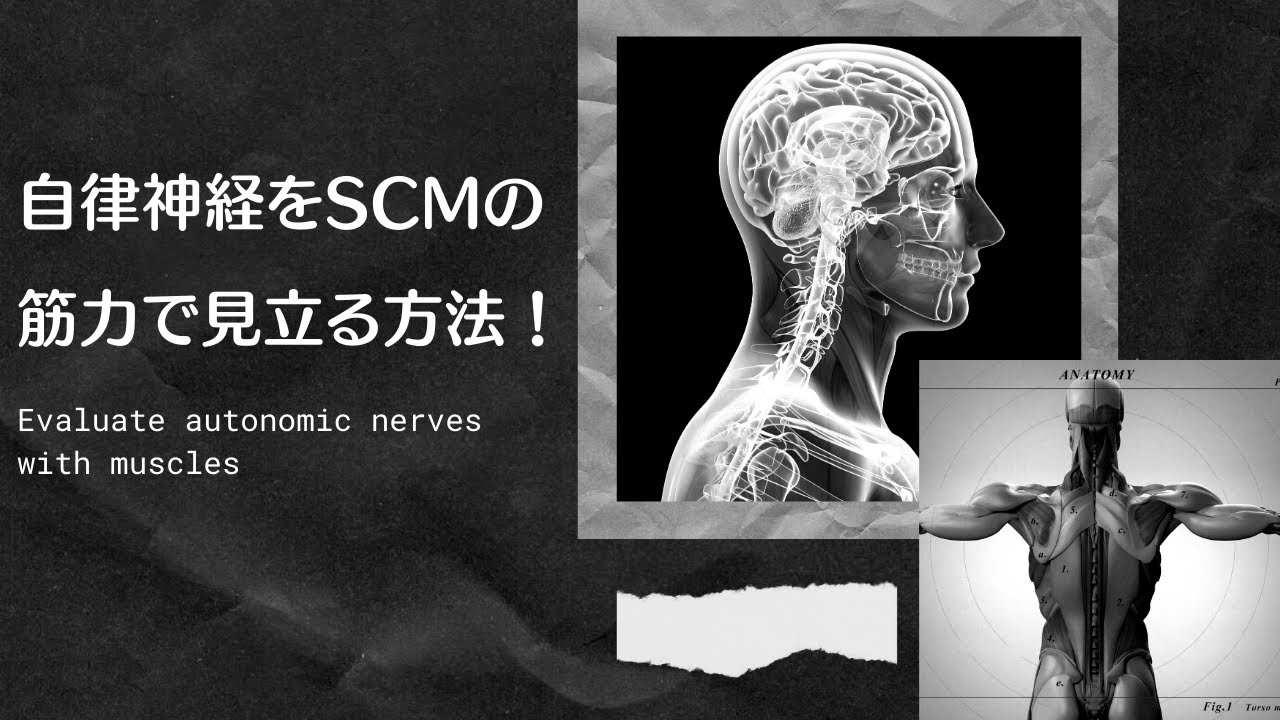 自律神経をSCMの筋力で見立てる方法!